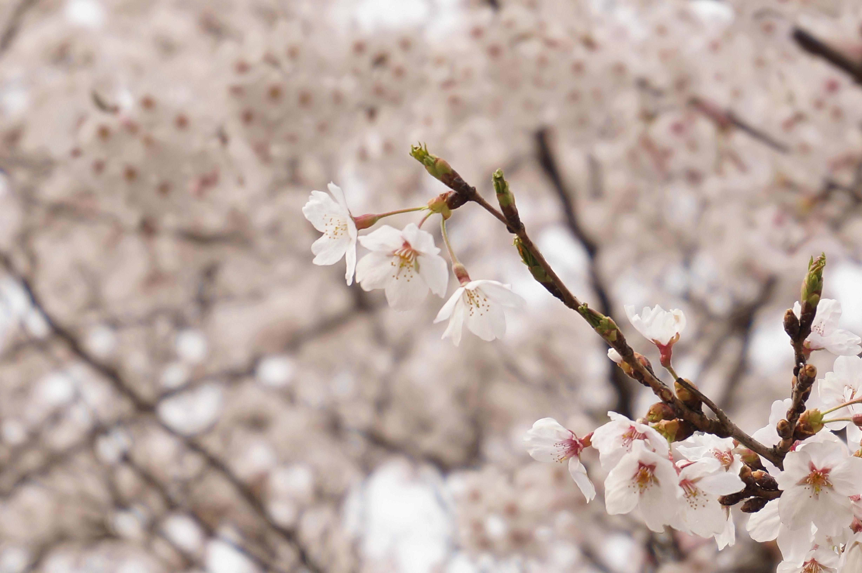 9 japońskich wyrażeń, które znaczą więcej