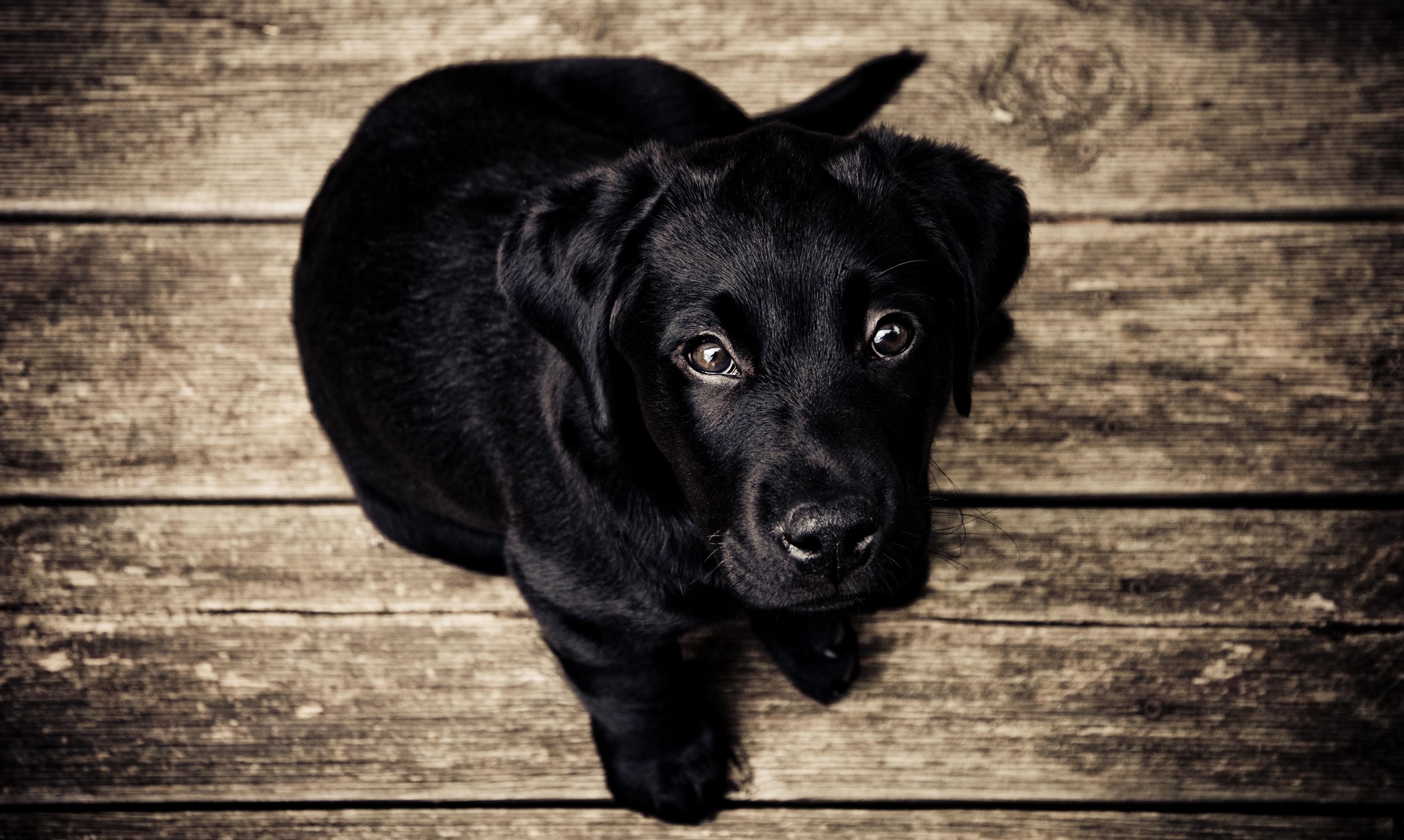 Zmiany na blogu, czyli zabijam szczeniaczki