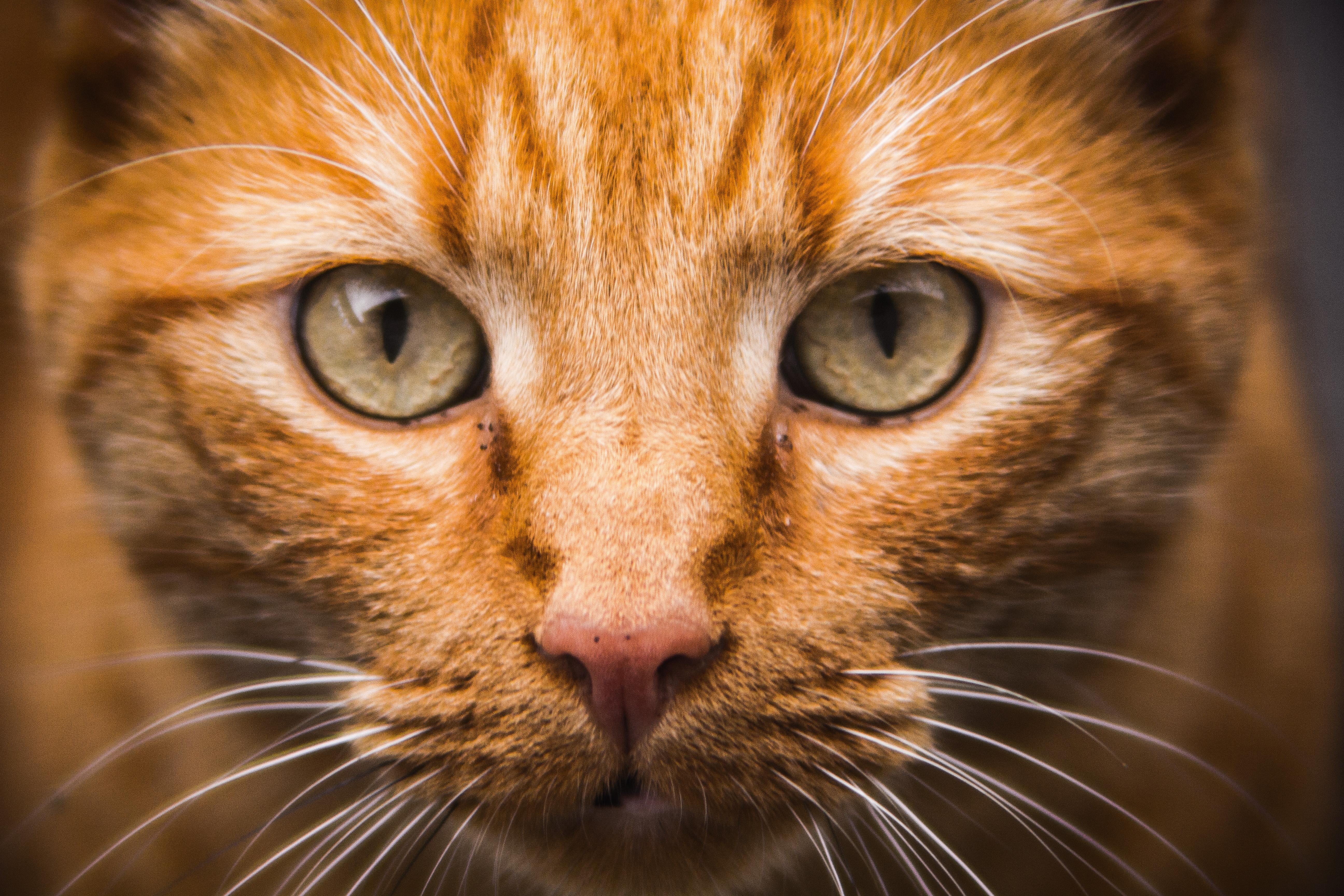 kot zwierzę