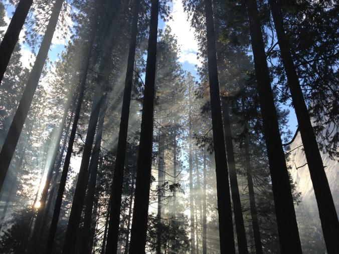 drzewa las