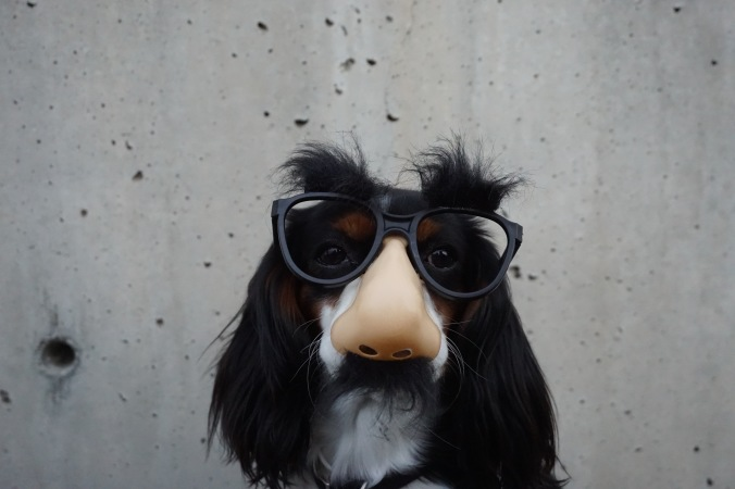 pies dziwny