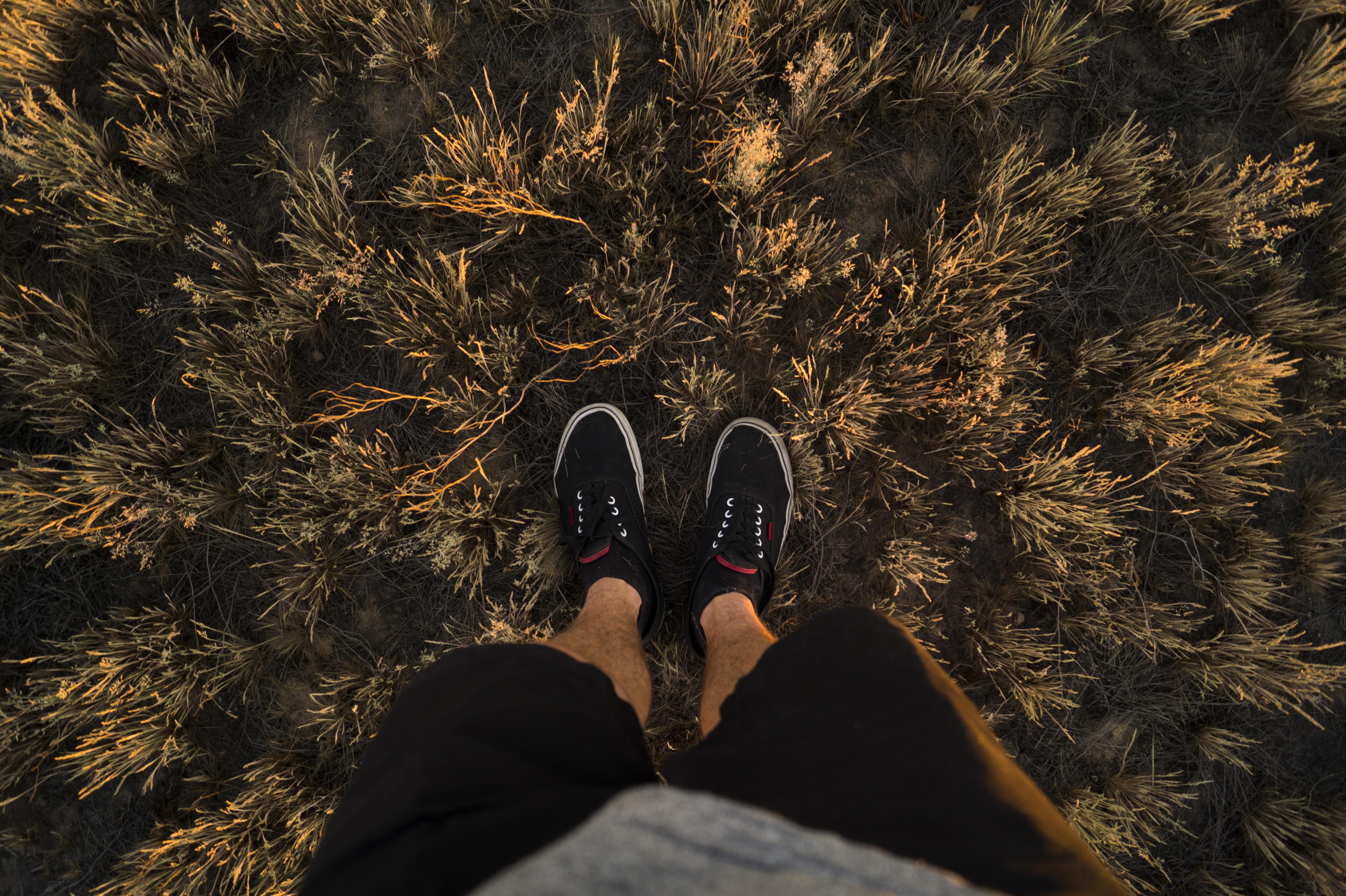 rosliny nogi