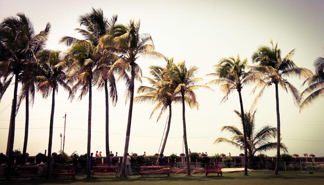 palmy wakacje chill